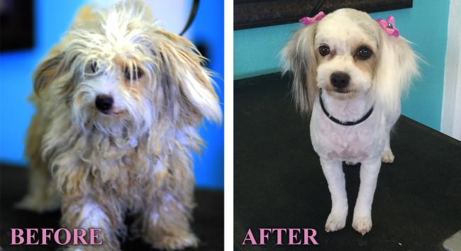 Local Vets And Groomers Humane Society Of Yuma Animal Shelter